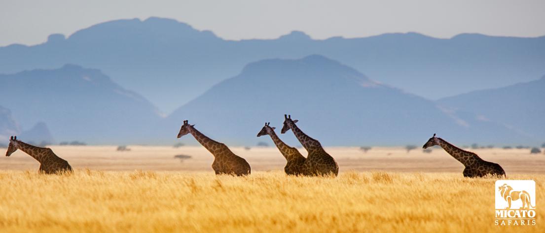 Micato-Safaris